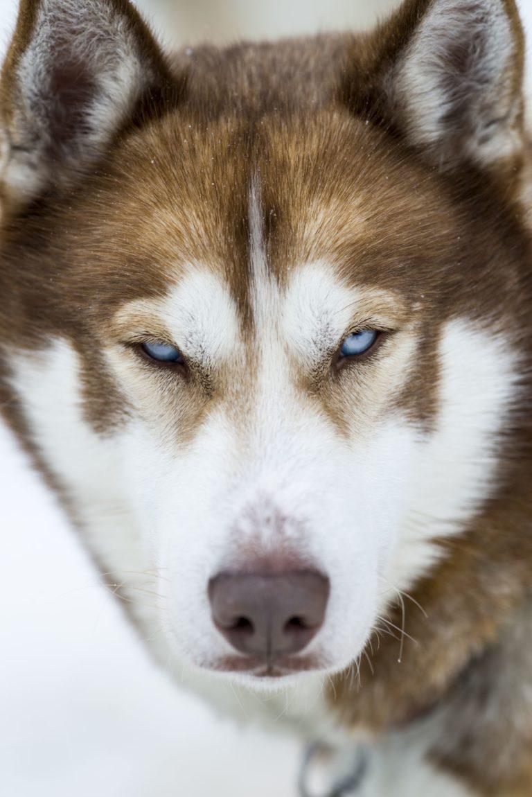 husky norwegen
